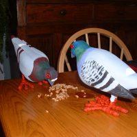 Pigeons by Bev Clark