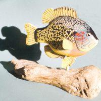 Sunfish 3 by Bev Clark