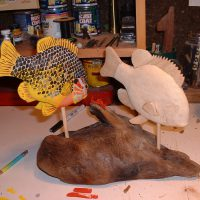 Sunfish - in progress by Bev Clark